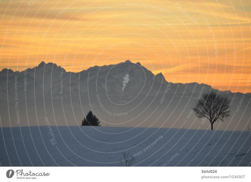 Alpen am Abend Natur weiß Baum Erholung Einsamkeit Landschaft ruhig Winter Ferne Berge u. Gebirge Schnee grau Horizont orange Feld Zufriedenheit
