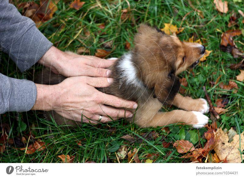 hundehalt Hund Mann Hand ruhig Tier Erwachsene Tierjunges Gefühle klein Freundschaft Zusammensein Wachstum berühren Schutz Sicherheit festhalten