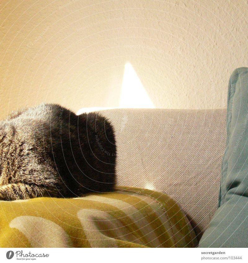 kratzbürstenlümmler endlich auf sofa Katze grün Sonne Erholung ruhig Wärme grau liegen Raum Häusliches Leben Stoff Falte Möbel Sofa Material hängen