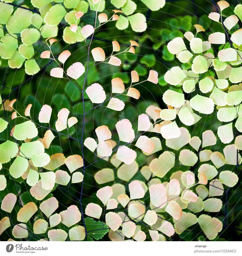 Filigran Natur Pflanze schön grün Blatt Umwelt gelb Leben Garten ästhetisch einzigartig exotisch Grünpflanze