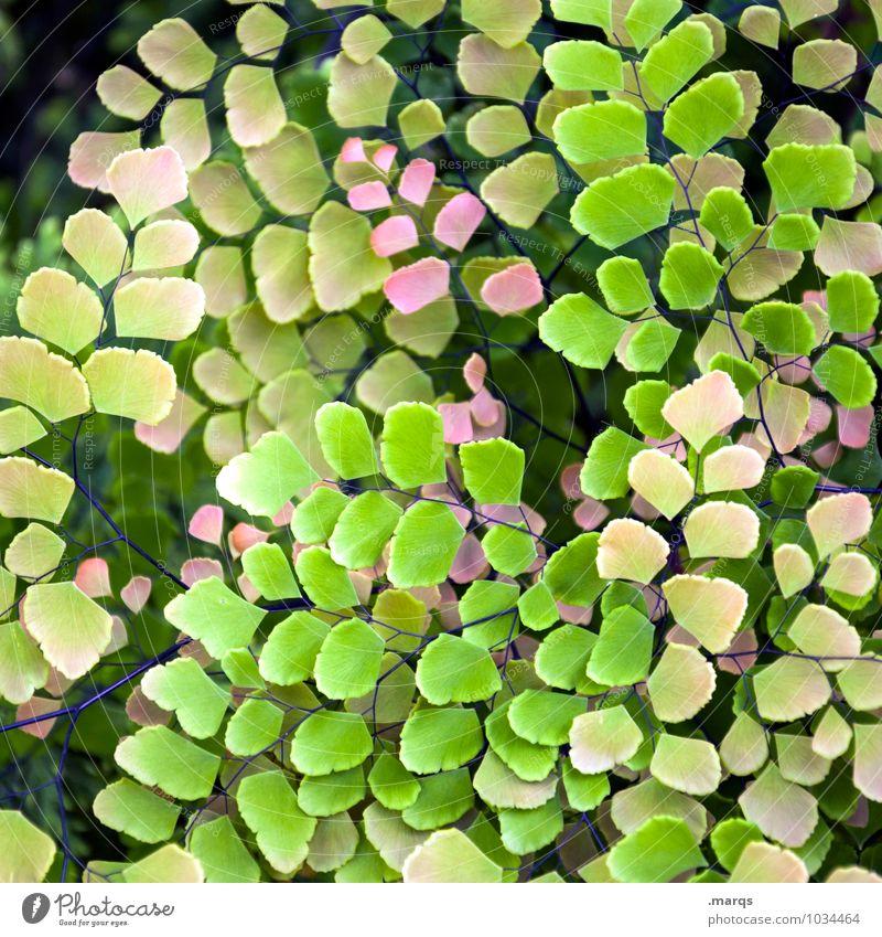 Filigran Natur Pflanze schön grün Blatt Umwelt gelb Leben Garten rosa ästhetisch exotisch Grünpflanze