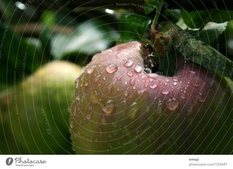 beiss rein! Natur Wasser Baum Gesundheit Lebensmittel rosa Frucht frisch Ernährung Wassertropfen nass süß lecker nah gut tief