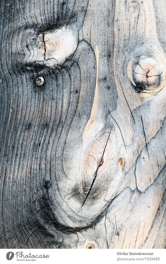 Holzart 2 Nutzpflanze Haus Mauer Wand Fassade atmen einzigartig nachhaltig natürlich Schutz ästhetisch Design Energie Natur Maserung Holzstruktur Linie Astloch