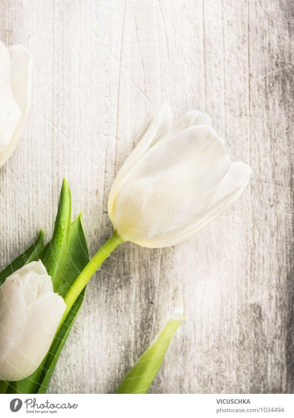 Weiße Tulpe auf grauen Holz Natur alt Pflanze weiß Sommer Blume Frühling Stil grau Holz Feste & Feiern Garten Design Dekoration & Verzierung Geburtstag Tisch