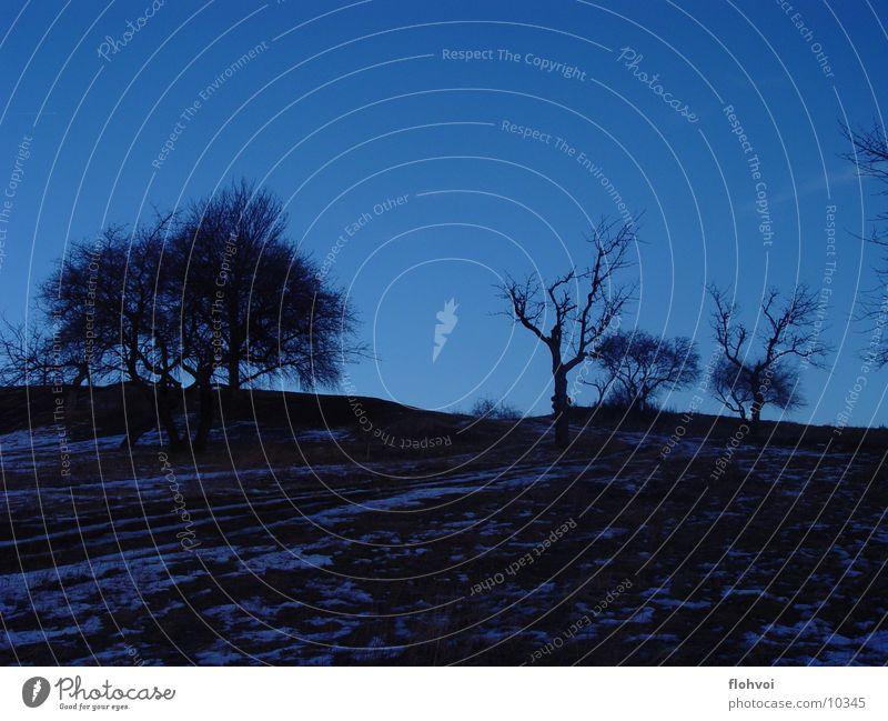 kirschbachtal Baum Winter kalt Schnee Tod Berge u. Gebirge blaustich