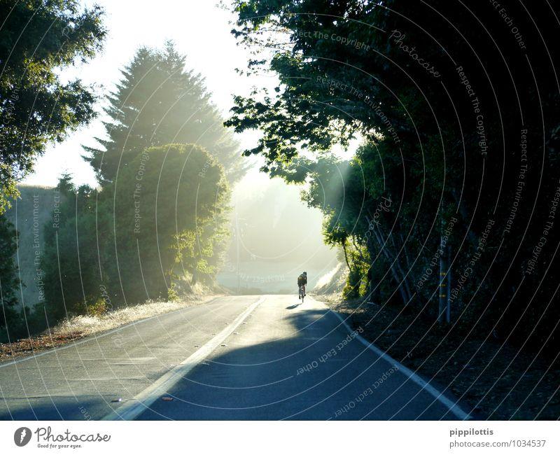 Sonnenrad Landschaft ruhig Straße Bewegung Sport Gesundheit Freizeit & Hobby Kraft Fahrrad Geschwindigkeit Schönes Wetter Fitness Abenteuer fahren dünn