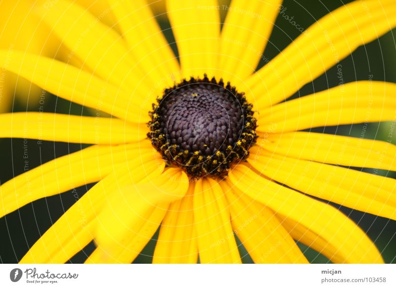 Sunny Natur schön Blume grün Pflanze Sommer Freude gelb Farbe Blüte Frühling braun Beleuchtung Hintergrundbild Stern (Symbol) Fröhlichkeit