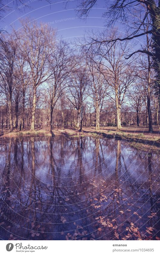 Bäume im Park Ferien & Urlaub & Reisen Tourismus Umwelt Natur Landschaft Wasser Himmel Herbst Winter Wetter Pflanze Baum Wald Seeufer Teich alt hoch