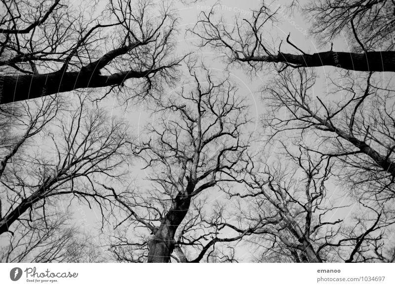 Geäst Ferne Freiheit Umwelt Natur Pflanze Luft Himmel Herbst Winter Klima Klimawandel Wetter schlechtes Wetter Dürre Baum Wald alt kalt grau Senior