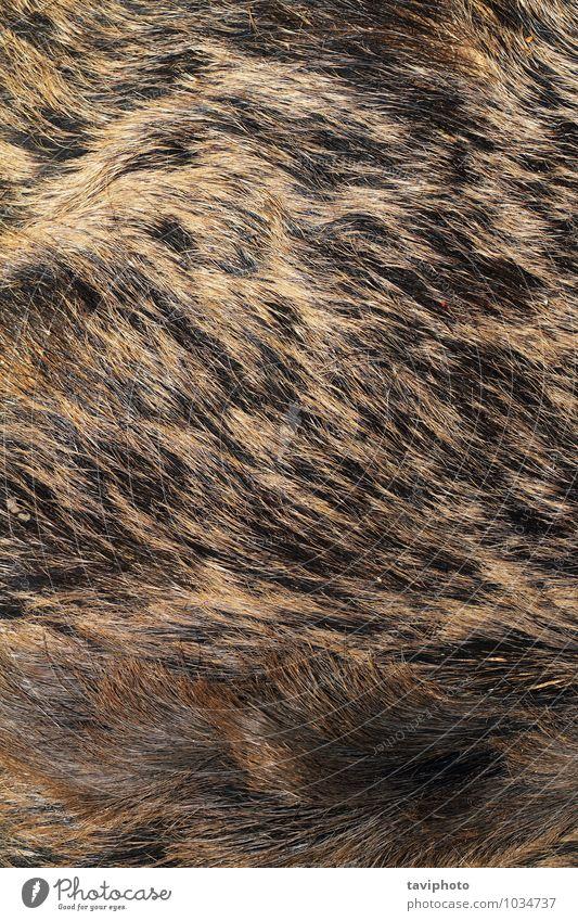 Natur schön Tier schwarz Wärme natürlich grau braun Behaarung wild authentisch Haut weich Europäer Fell Material