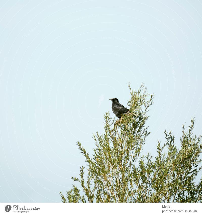 Edgar Natur Pflanze Baum Einsamkeit Tier Umwelt natürlich klein oben Vogel Wildtier sitzen frei einzeln Ast Baumkrone