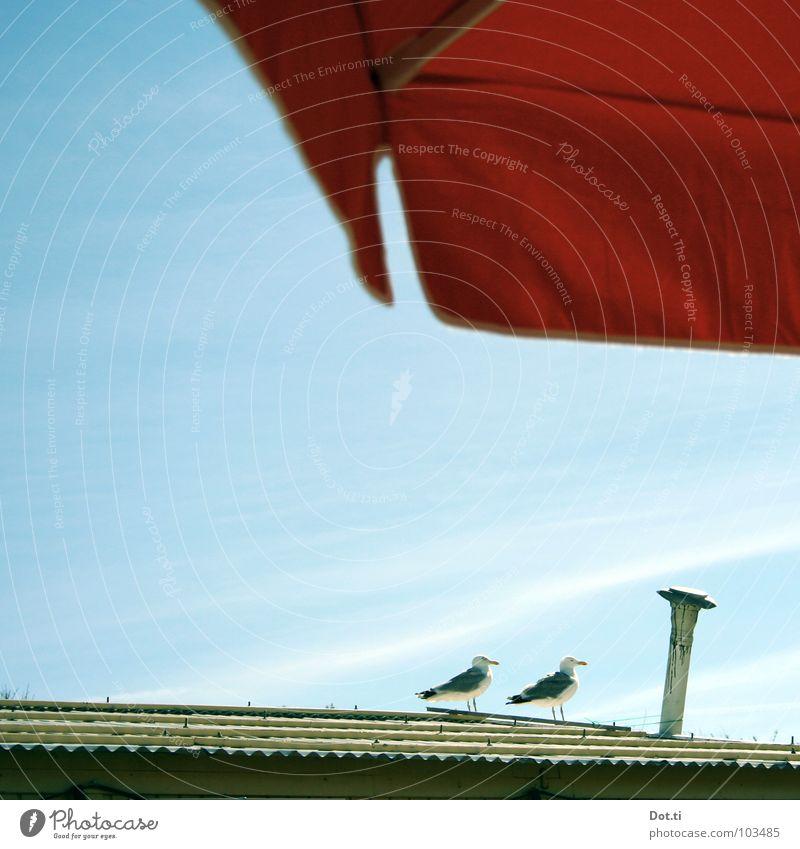 het meeuwtje | de meeuwtjes [p] Himmel rot Sommer Ferien & Urlaub & Reisen Tier Erholung 2 orange Vogel Tierpaar paarweise Pause Dach Sonnenschirm