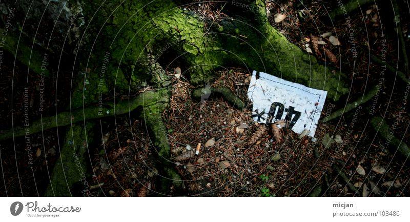TrashTree40* Natur alt Pflanze grün weiß Baum Blatt dunkel Wald Umwelt braun Regen glänzend Angst dreckig leer