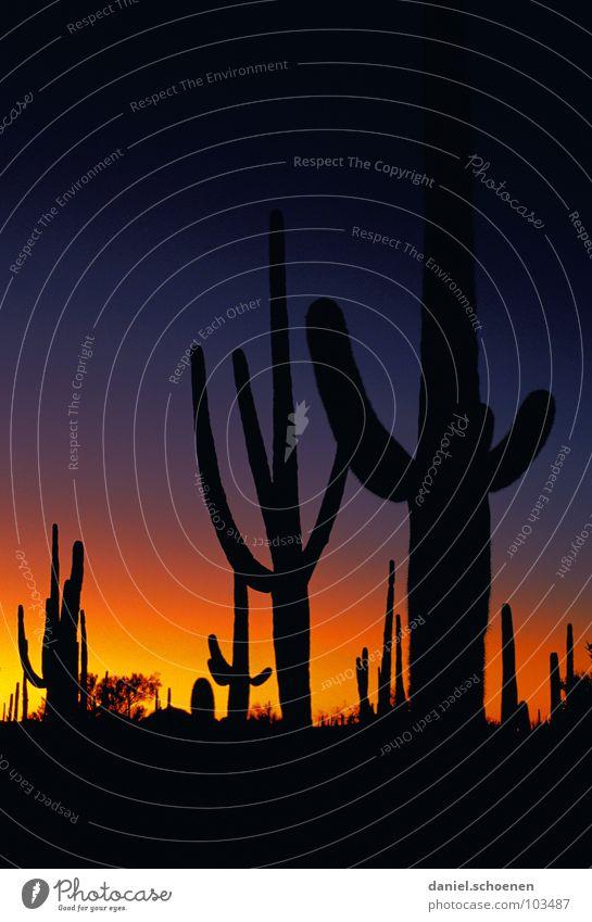 Wilder Westen und heulende Coyoten Kaktus Arizona Licht Abenddämmerung Sonnenuntergang Farbverlauf geheimnisvoll dramatisch unheimlich Nacht dunkel schwarz