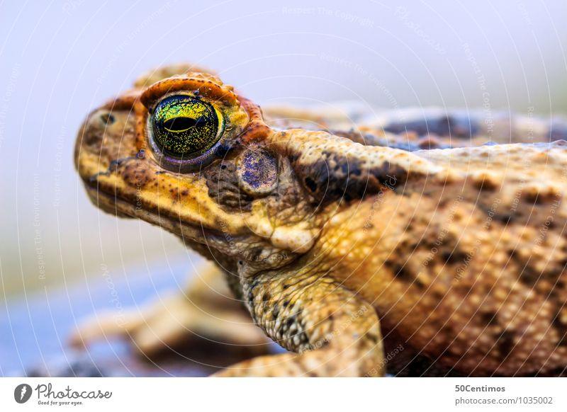 die Kröte im Detail Tier Wildtier Frosch Reptil 1 beobachten Denken Blick Farbfoto Gedeckte Farben Außenaufnahme Detailaufnahme Makroaufnahme Froschperspektive