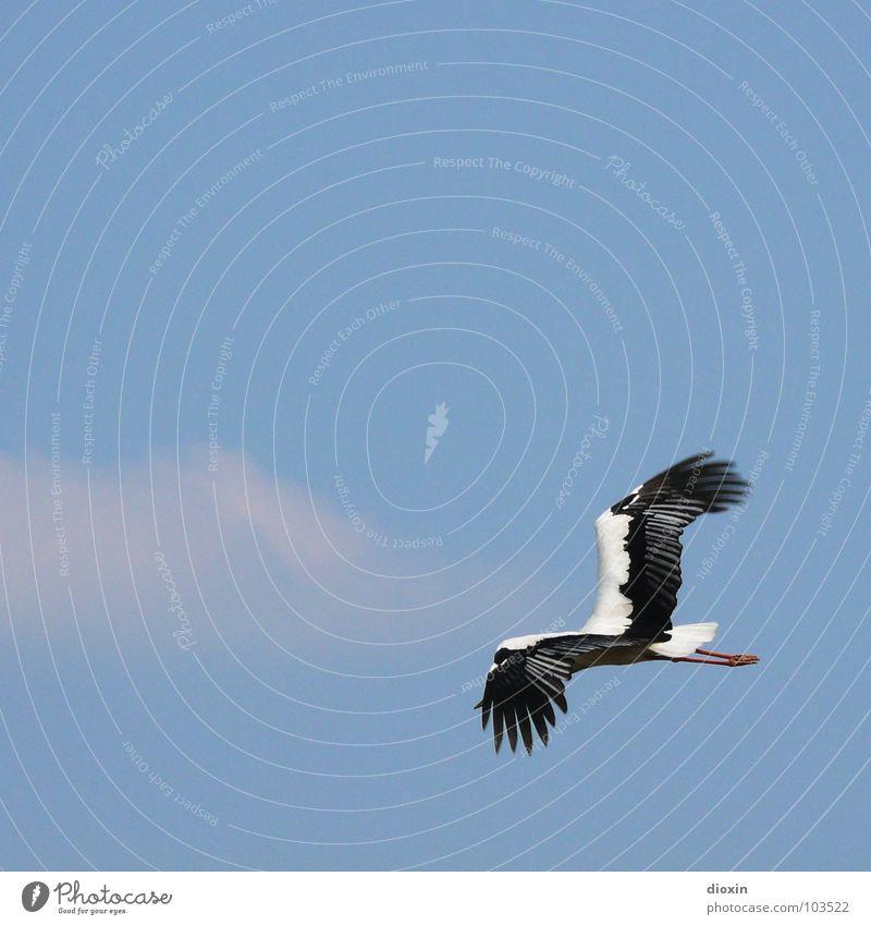 Headless Natur Himmel weiß blau Sommer Ferien & Urlaub & Reisen schwarz Wolken Tier Frühling Freiheit Vogel Umwelt fliegen Feder Wildtier