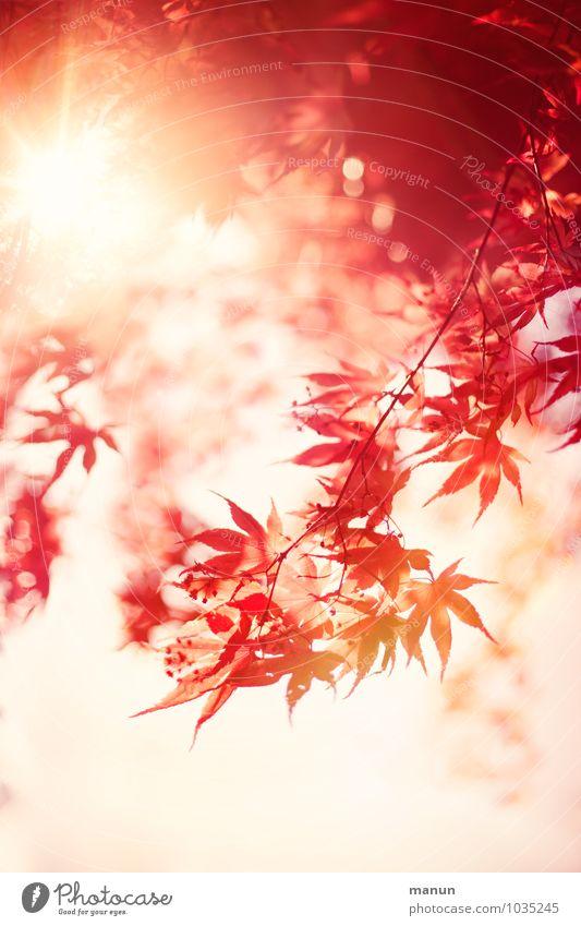Sonnenflecken Natur Baum Erholung rot Blatt gelb Wärme Leben Herbst Frühling Glück Zufriedenheit fantastisch Schönes Wetter einzigartig