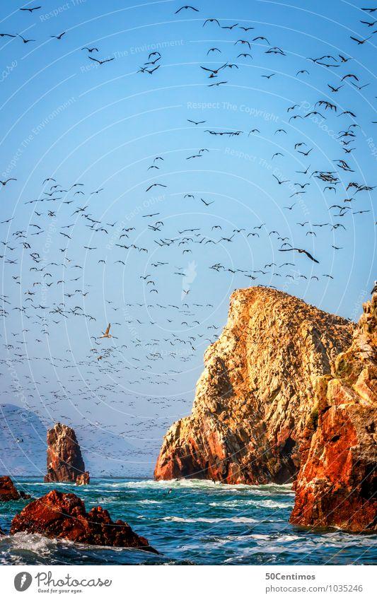 Vögel füllen den Himmel im Nationalpark Paracas, Pisco Peru Natur Sommer Meer Landschaft Tier Ferne Umwelt Gefühle Küste Freiheit Stimmung Vogel Felsen Wellen authentisch frei