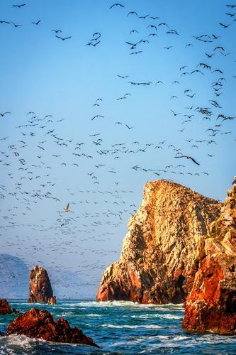 Vögel füllen den Himmel im Nationalpark Paracas, Pisco Peru Natur Sommer Meer Landschaft Tier Ferne Umwelt Gefühle Küste Freiheit Stimmung Vogel Felsen Wellen