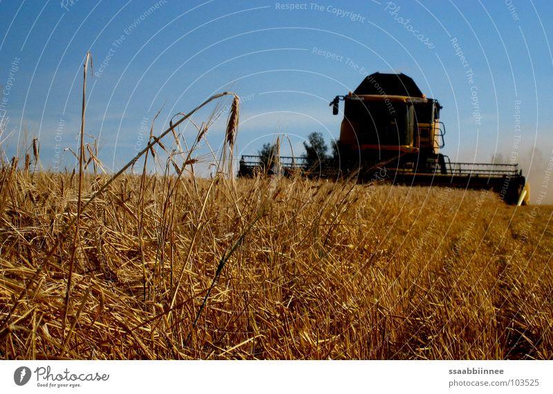 Bald geschafft! Sommer Feld Technik & Technologie Stress Ernte Staub Ähren Gerste Stoppelfeld Mähdrescher Getreideernte
