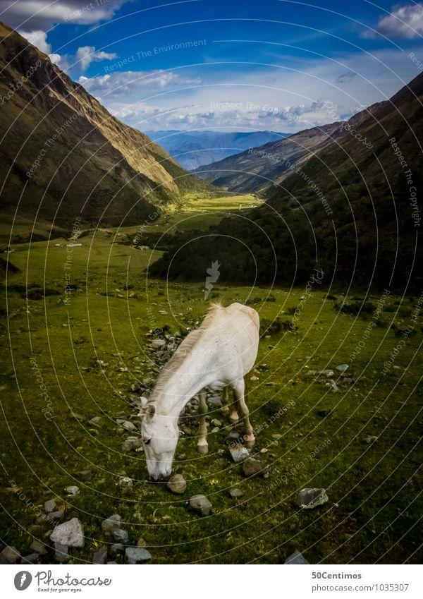 Das weiße Pferd in den Bergen Ferien & Urlaub & Reisen Tourismus Ausflug Ferne Freiheit Sport Reitsport Natur Landschaft Schönes Wetter Gras Grünpflanze Wiese