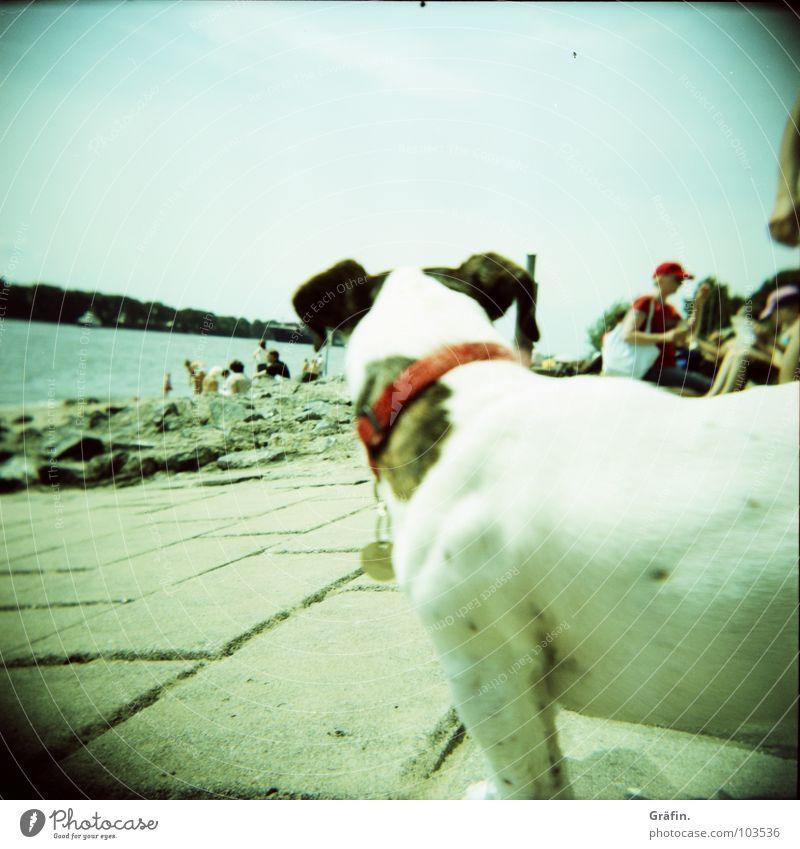 Wer guckt denn da? Hund Elbstrand Sommer Strand Ebbe Halsband Holga Steinplatten bevölkert Wolken Wasserfahrzeug Tier Säugetier Lomografie Küste Elbe Sand