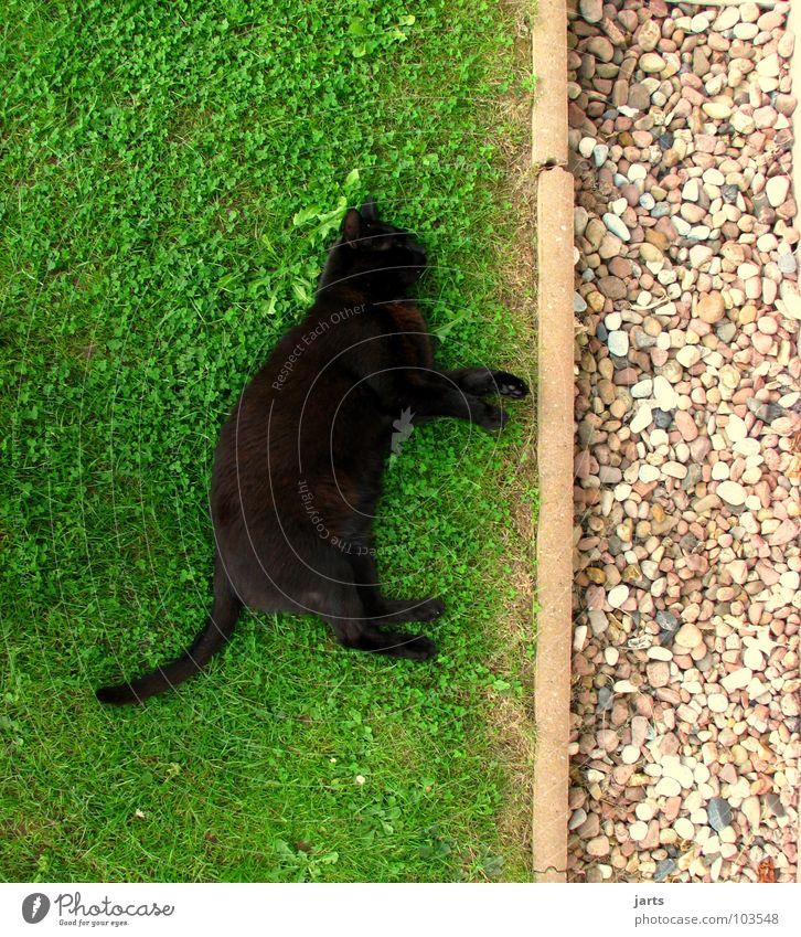 Katzenleben Tier Erholung Wiese Garten Stein schlafen Säugetier