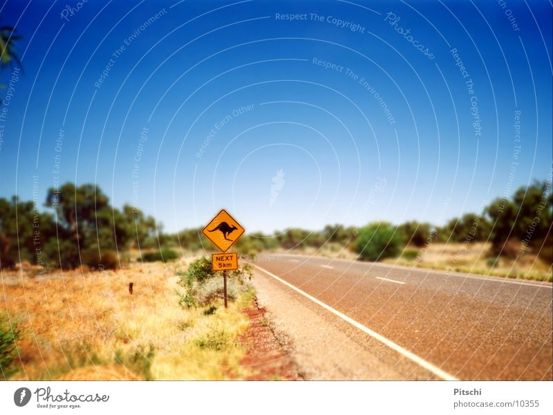 Känguruhschild Farbfoto Außenaufnahme Menschenleer Tag Schwache Tiefenschärfe Sonne Sommer Schönes Wetter Sträucher Wüste Verkehr Verkehrswege Straßenverkehr