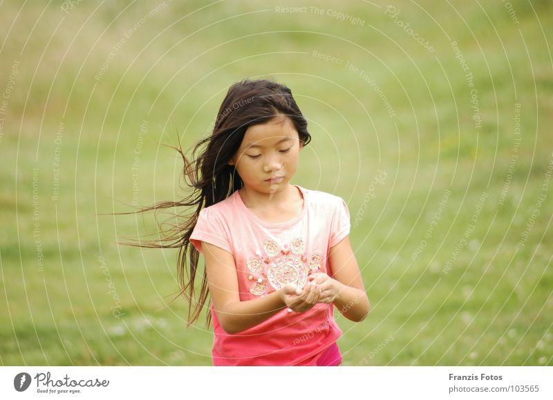 gefunden Mädchen Japan China Wiese Trauer Neugier Kind Ausland Wind Traurigkeit