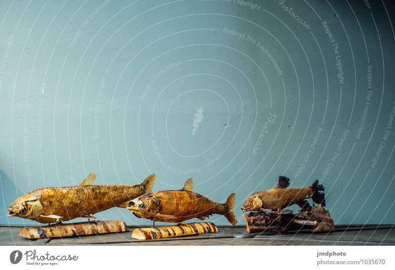 Trockenfisch auf Holz Lebensmittel Fisch Lifestyle kaufen Stil Design Kunst Kunstwerk Skulptur Tier Totes Tier Schuppen 3 Tiergruppe Schwarm ästhetisch Flosse