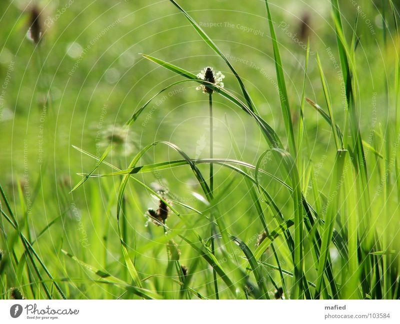Little Hideaway Sonne grün Sommer Wiese Blüte Gras träumen Wärme Wind liegen Physik Stengel Halm sanft Biegung Versteck