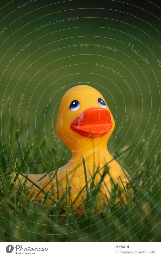 Rubber Ducky, you're the one Spielen Gras Rasen Freizeit & Hobby Spielzeug Ente Badeente