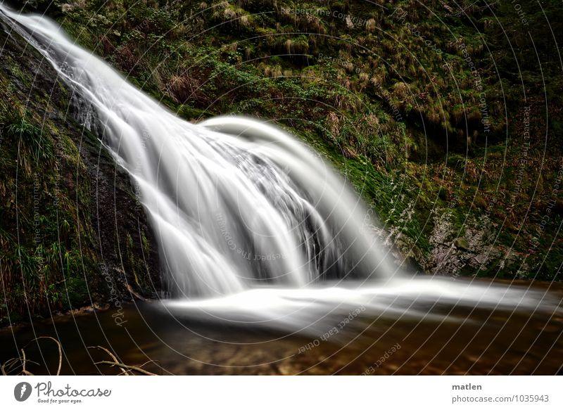 mainstream Landschaft Pflanze Wasser Gras Moos Felsen Wellen Wasserfall braun grün weiß fließen Schwarzwald Bach Farbfoto Gedeckte Farben Außenaufnahme Tag