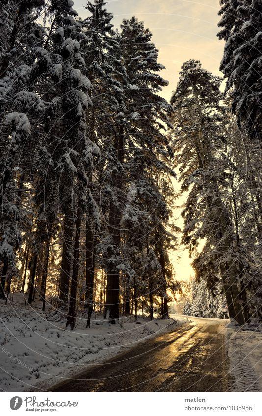 Schimmer Natur Landschaft Himmel Wolken Sonne Sonnenaufgang Sonnenuntergang Winter Wetter Schönes Wetter Eis Frost Schnee Baum Wald Berge u. Gebirge braun gold