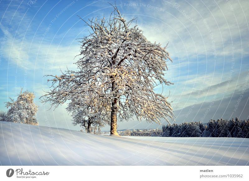 Zeit der langen Schatten Natur Landschaft Pflanze Himmel Wolken Horizont Winter Wetter Schönes Wetter Schnee Baum Wiese Wald Hügel kalt blau braun weiß Obstbaum