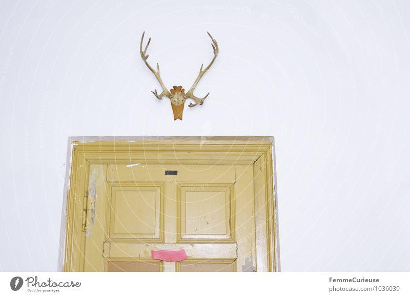 Hängegeweih. weiß Haus Tier gelb Wand Gebäude Mauer Kunst Raum Häusliches Leben Dekoration & Verzierung Tür Kreativität Burg oder Schloss schäbig bizarr