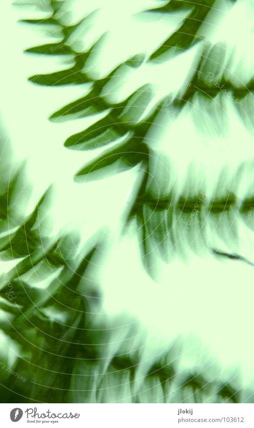 Gegen-Licht-Gestalten IX Natur grün blau Pflanze Sommer Leben Graffiti hell Nebel weich zart Biologie Biologische Landwirtschaft Echte Farne Photosynthese