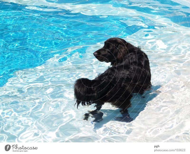 Abkühlung Hund Wasser Tier schwarz Wärme Spielen braun Schwimmen & Baden liegen warten Nase Seil kaputt Pause Spaziergang Schwimmbad