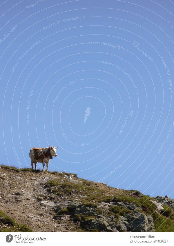 Ein Handstand hilft immer! Himmel blau Berge u. Gebirge Stein Wege & Pfade wandern Kuh