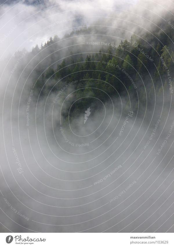 Der grüne Wald brennt Wolken Nebel Baum Fahrstuhl blau Bewusstseinsstörung