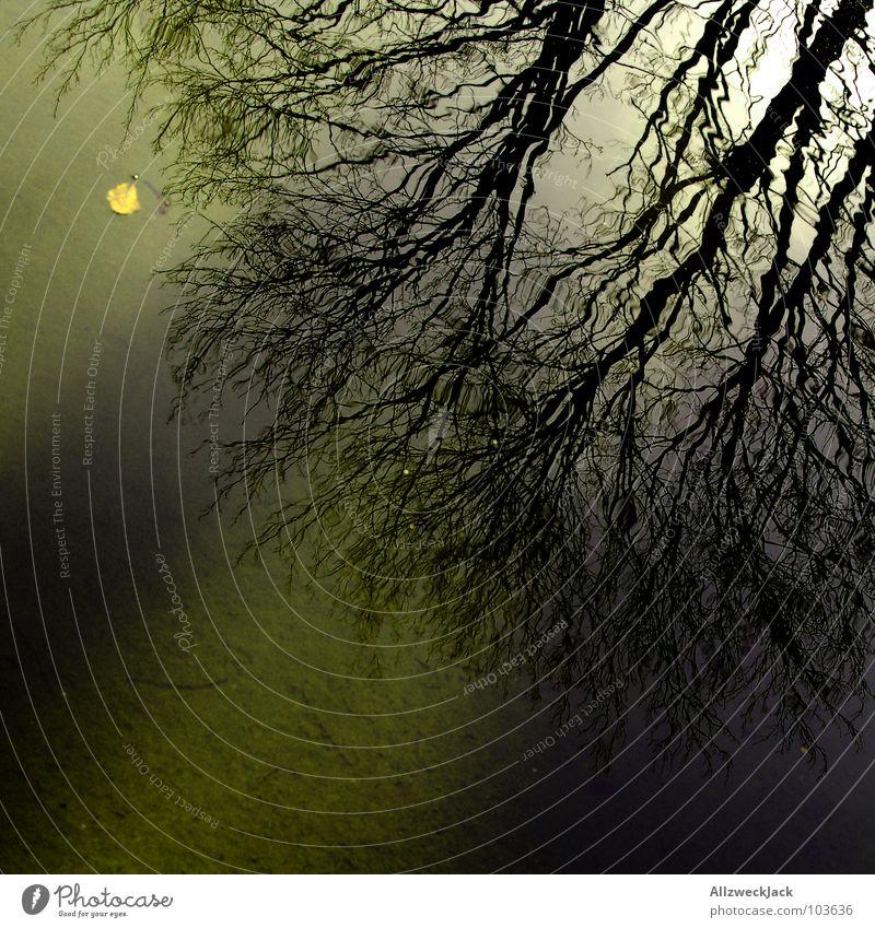 Angriff des Spiegelgeästs Reflexion & Spiegelung nass Baum Geäst verzweigt gedreht verkehrt dunkel Schatten verwurzelt Silhouette See Wasseroberfläche Herbst
