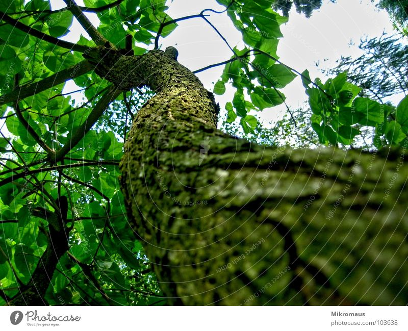 Ich lach mir 'n Ast Natur Himmel Baum Pflanze Sommer Blatt Wald oben Garten Park hoch Perspektive aufwärts Baumrinde Geäst