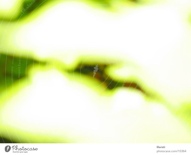 Makro Grün obskur Überbelichtung