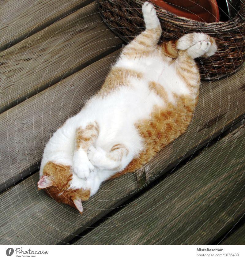 Herr.Kater Katze schön weiß Erholung rot Tier Glück liegen Zufriedenheit schlafen Sicherheit Fell Balkon Vertrauen Müdigkeit Haustier