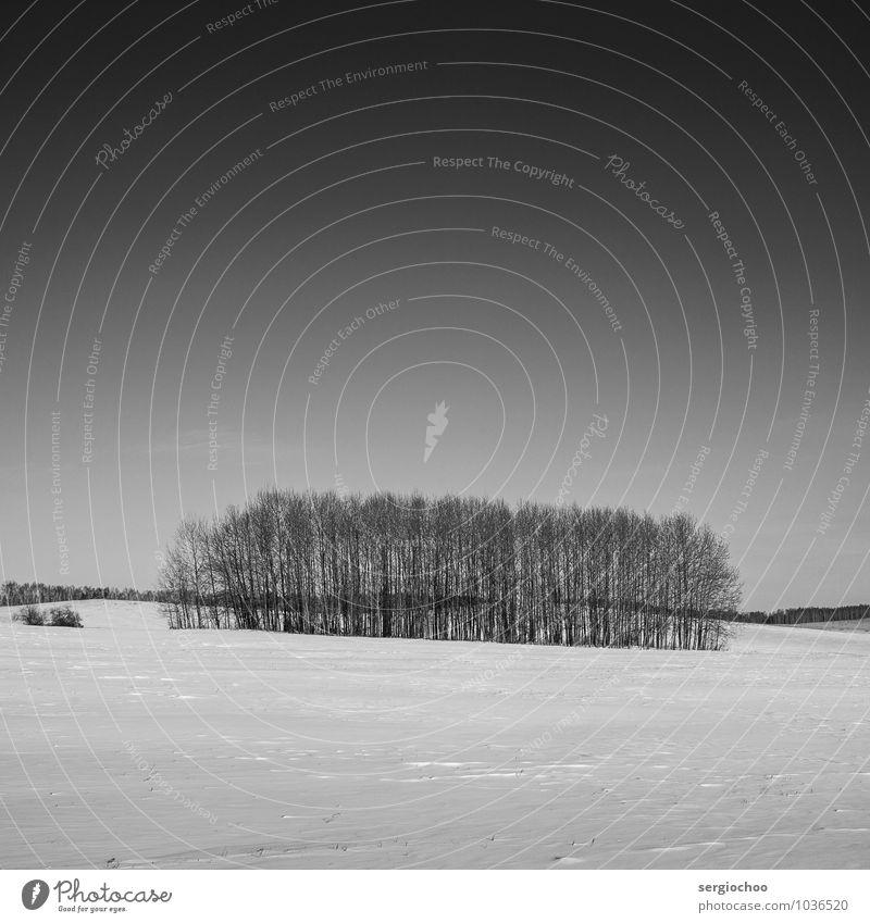 Winterbäume Himmel Natur schön weiß Baum Einsamkeit Landschaft schwarz Wald kalt Schnee Stimmung Kunst Horizont Eis