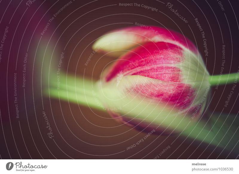 bedeckt oder versteckt schön grün Blume ruhig Umwelt Blüte Frühling Stimmung braun rosa liegen Freundschaft Wachstum elegant Zufriedenheit Perspektive