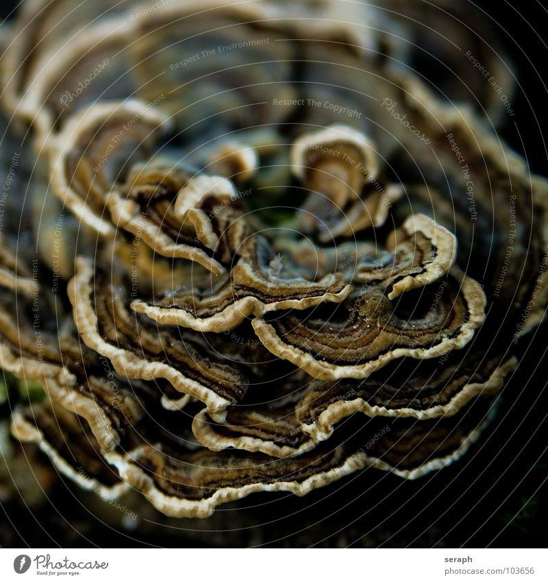 Baumpilz Natur Pflanze Umwelt Herbst Jahreszeiten Baumstamm Moos ökologisch Pilz herbstlich Botanik organisch Lamelle Pilzhut Knolle Flechten