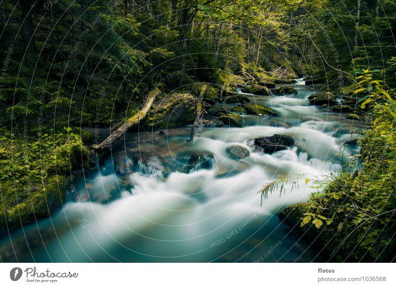 let it flow Natur Pflanze Tier Wasser Wetter Baum Wald Flussufer Bach Flüssigkeit kalt nass blau grün schwarz Farbfoto Außenaufnahme Menschenleer