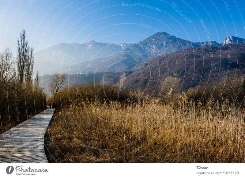 Kalterer See Umwelt Natur Landschaft Wolkenloser Himmel Herbst Winter Schönes Wetter Sträucher Schilfrohr Seeufer Moor Sumpf nachhaltig natürlich blau ruhig
