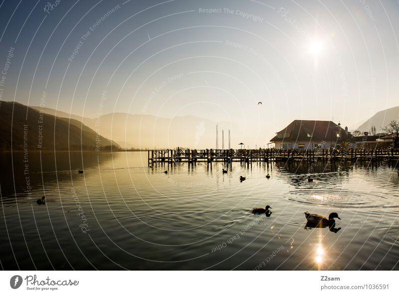 Kalterer See Natur Ferien & Urlaub & Reisen Erholung Landschaft ruhig Winter Umwelt natürlich Vogel Wasserfahrzeug frisch Idylle Italien Schönes Wetter Seeufer